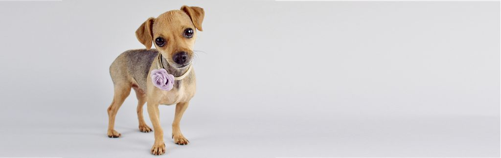 Client Resources Humane Society Sarasota County